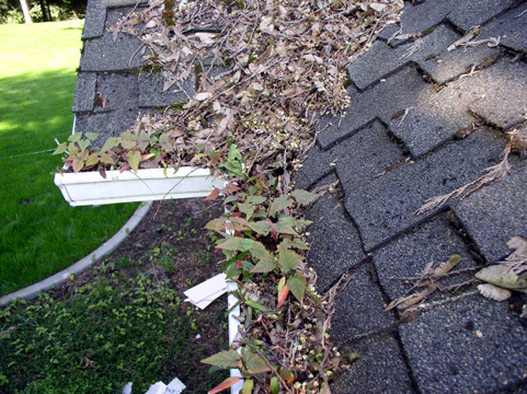 Eaves Trough Cleaning -  <a class='fecha' href='https://wallinside.com/post-63673800-caring-for-gutters-correctly.html'>read more...</a>    <div style='text-align:center' class='comment_new'><a href='https://wallinside.com/post-63673800-caring-for-gutters-correctly.html'>Share</a></div> <br /><hr class='style-two'>    </div>    </article>   <article class=