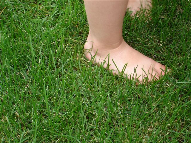 Our owners daughter foot feeling a lush carpet of organically maintained grass